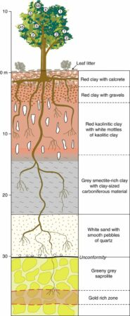 Diagram of Gold being absorbed via the roots of the Trees.