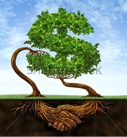 Strengthen your roots with wa money tree