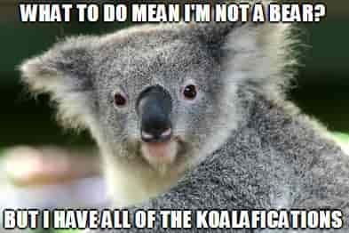 Koala has all the Koalafications